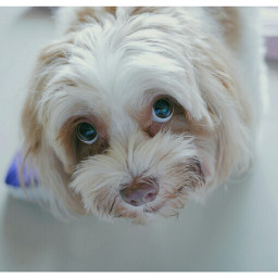lovemelovemydog dog pet animal animallovers