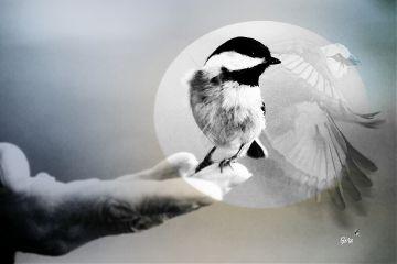 bird hand fly