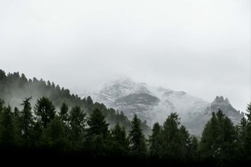 freetoedit nature forest rock fog
