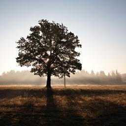 freetoedit tree treeoflife remixit