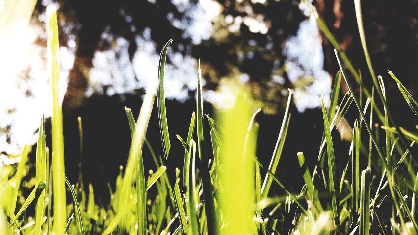 #closeup,#nature,#green
