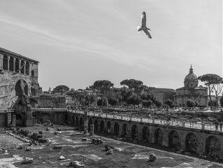 blackandwhite rome monochrome city cityscape
