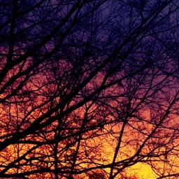 colorful sun sunset tree
