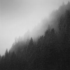 blackandwhite nature fog winter