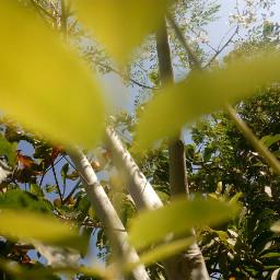 noedit nofilter green spring leaves