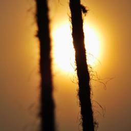 freetoedit sunset sunsetphotography sunlight sunsetlovers