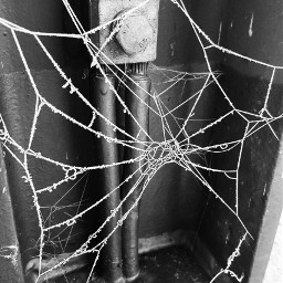 freetoedit blackandwhite frosted spiderwebs photography