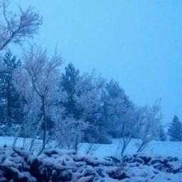 wintermorning dpcwinterminimalism