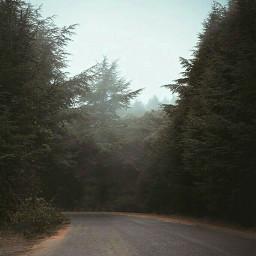 photography fog photographylife forest road freetoedit
