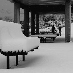 snow winter blackandwhite