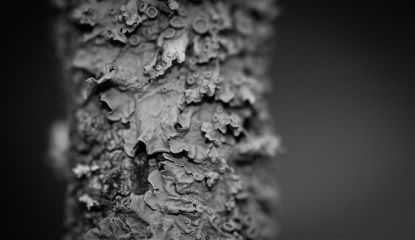 blackandwhite macro photography nature closeup