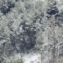 snow trees photo photography landscape freetoedit