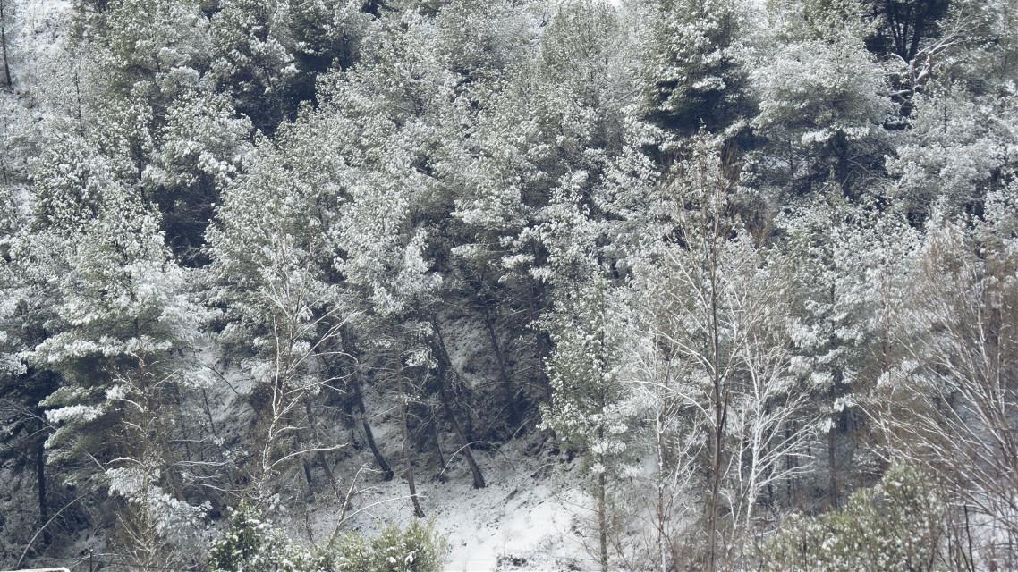 Y nevó. #snow #trees #photo #photography #landscape  #FreeToEdit