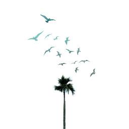 freetoedit tree birds girls madewithpicsart