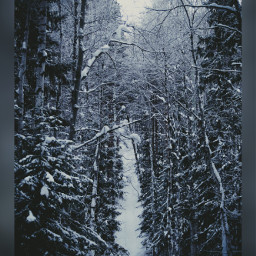 winter forest snow nature trees