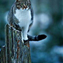 kitten lovecats likeforlike followforfollow repostforrepost freetoedit