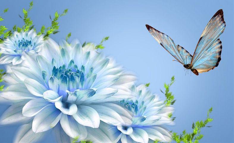 freetoedit flowers butterfly