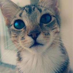 cute kitty kittycatlove kittylover freetoedit