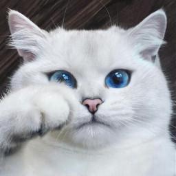 cat gato curious freetoedit