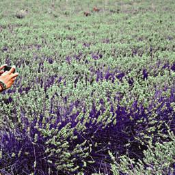 freetoedit color fotografie purple