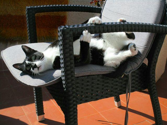 freetoedit petsandanimals mypet cute cats