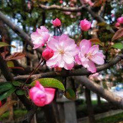 blossom flowers nature spring shanghai