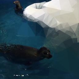 freetoedit seal ice pool cuteanimal