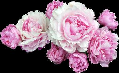 flower flowercrown freetoedit