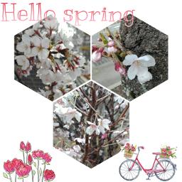 freetoedit spring flowers flower blossom