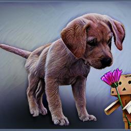 madewithpicsart  #madewithpicsartdrawingtools freetoedit #dog danbo flower