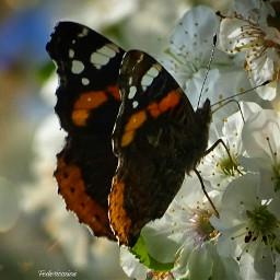macrophotography macronature lovenature macro#butterfly naturalbeauty